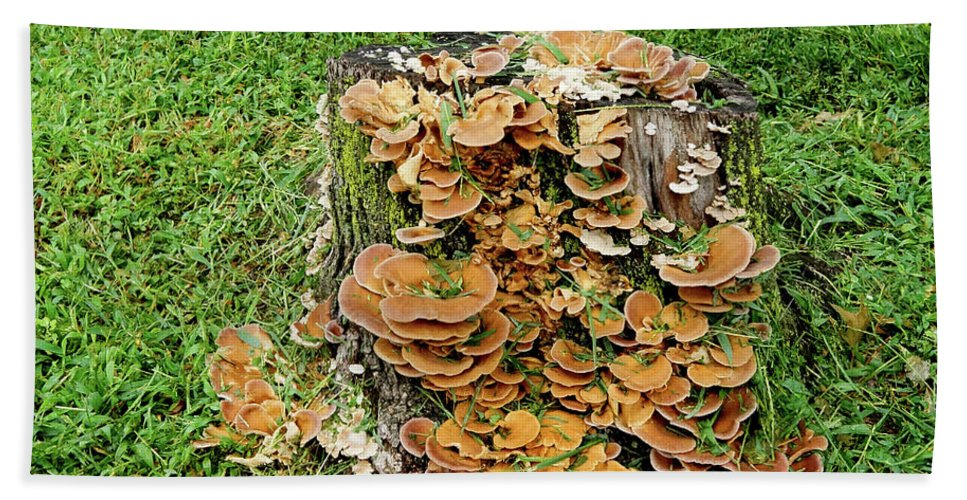 Mushrooms Bath Sheet featuring the photograph Fungus Bouquet by Cate Franklyn