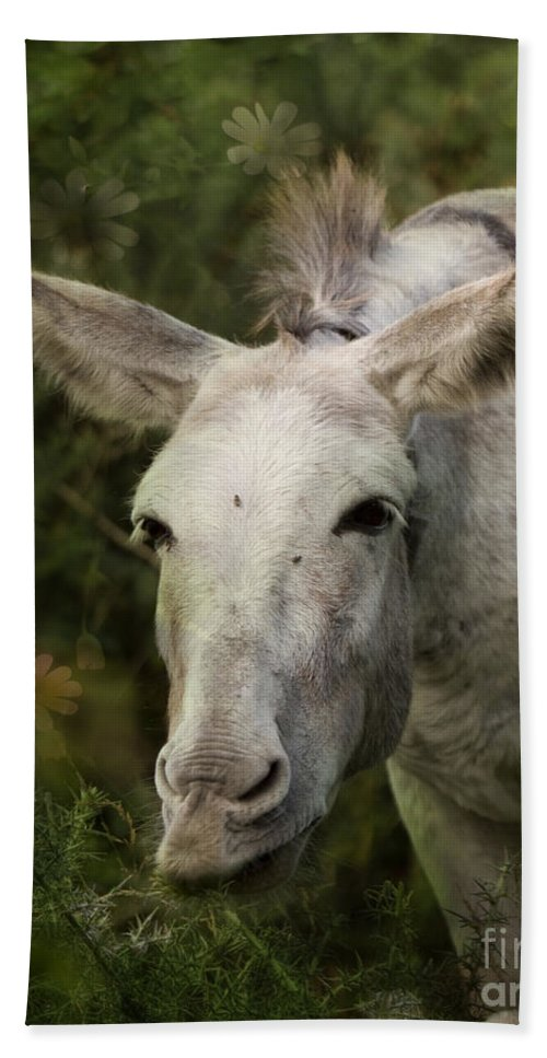 Donkey Hand Towel featuring the photograph Funky Donkey by Angel Tarantella