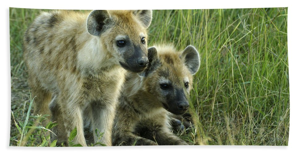 Africa Hand Towel featuring the photograph Fuzzy Baby Hyenas by Michele Burgess