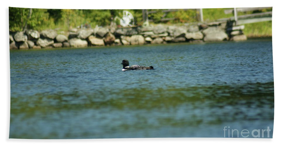Common Loon Hand Towel featuring the photograph Fuzzy Dew by Judy Carr