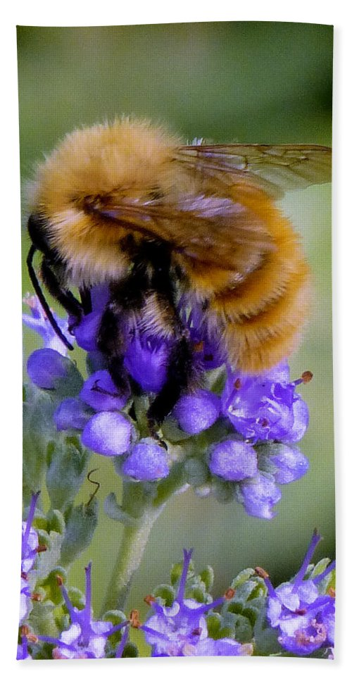 Nature Hand Towel featuring the photograph Fuzzy Honey Bee by Richard Rutan