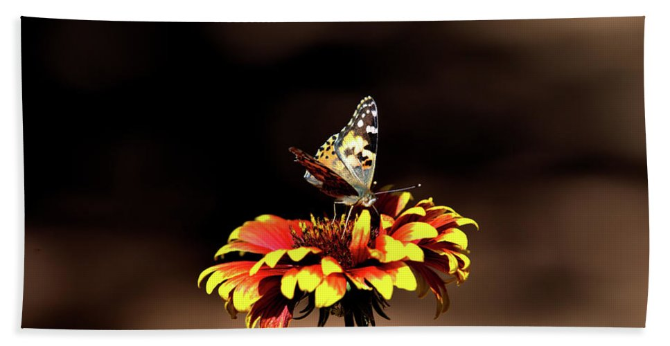 Butterfly Gaillardia Flowers Butterflies Nature Outdoors Blooms Pretty Orange Yellow Spring Summer Floral Insect Insects Bath Sheet featuring the photograph Gaillardia And Butterfly by Chris Giese