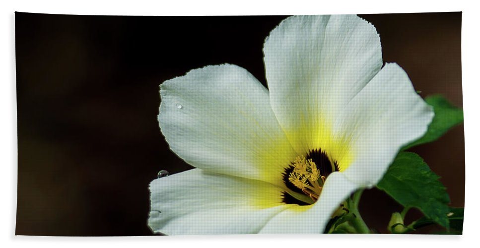 Flowers Bath Sheet featuring the photograph Garden Flower by Barbara King