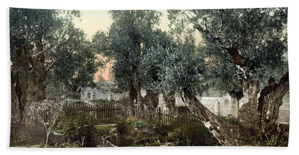 1900 Hand Towel featuring the photograph Garden Of Gethsemane by Granger