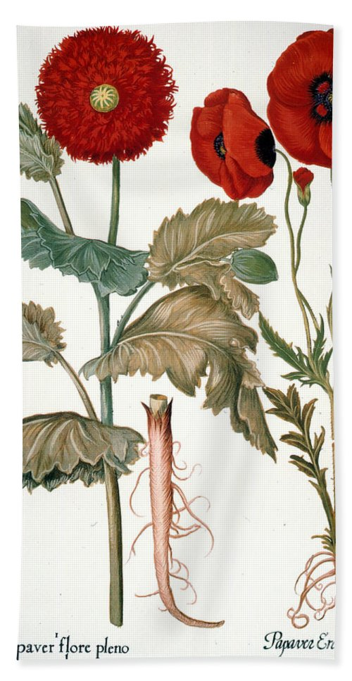 1613 Hand Towel featuring the photograph Garden Poppy by Granger