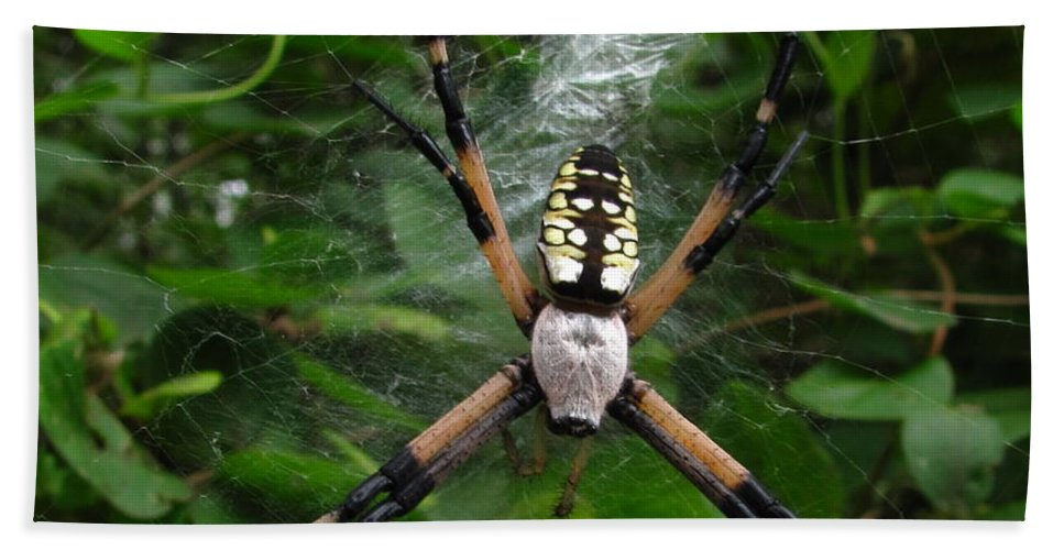 Black And Yellow Garden Spider Images Garden Spider Prints Arachnid Images Forest Ecology Biodiversity Nature Entomology Food Web Maryland Spider Images Maryland Spider Prints Hand Towel featuring the photograph Garden Spider by Joshua Bales
