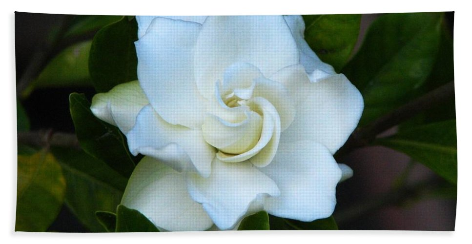 Gardenia Bath Sheet featuring the photograph Gardenia 5 by J M Farris Photography