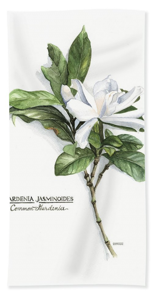 Flora Hand Towel featuring the painting Gardenia Jasminoides by Rowena Finn