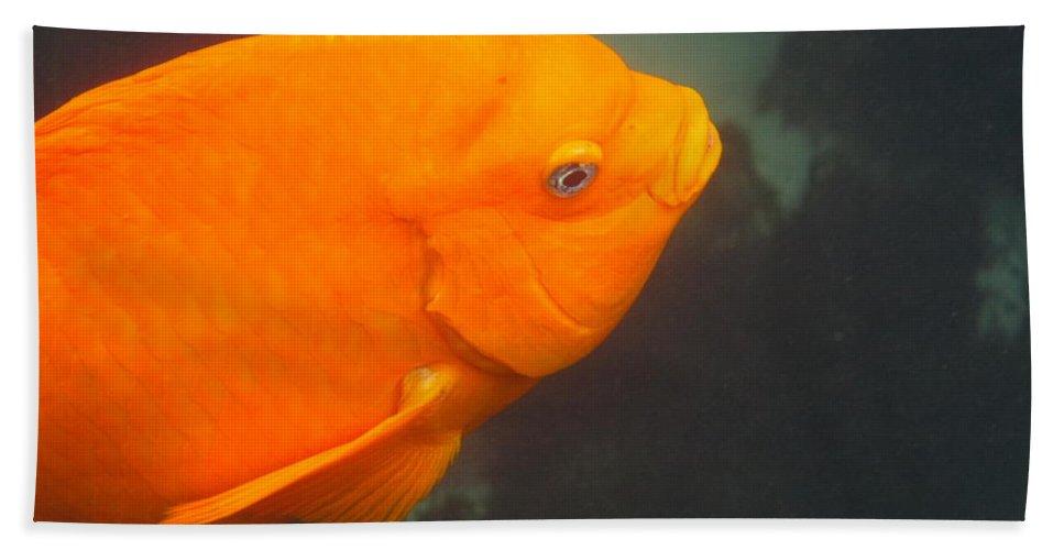 La Jolla Cove Hand Towel featuring the photograph Garibaldi 1 by Marta Robin Gaughen