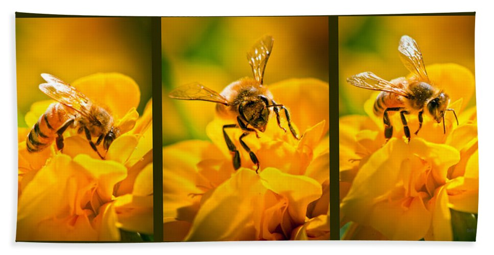 Bees Bath Sheet featuring the photograph Gathering Pollen Triptych by Bob Orsillo