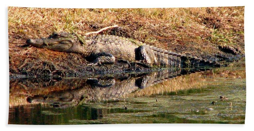 Gator Bath Sheet featuring the photograph Gator 5 by J M Farris Photography