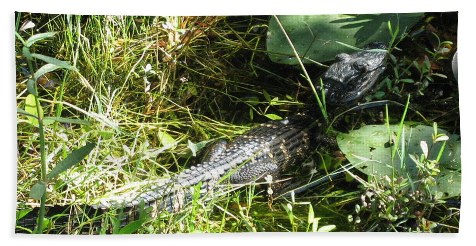 Gator Hand Towel featuring the photograph Gator Baby by Christiane Schulze Art And Photography