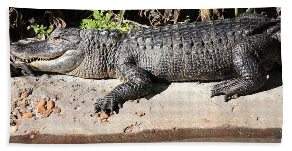 Gator Hand Towel featuring the photograph Gator by Carol Groenen