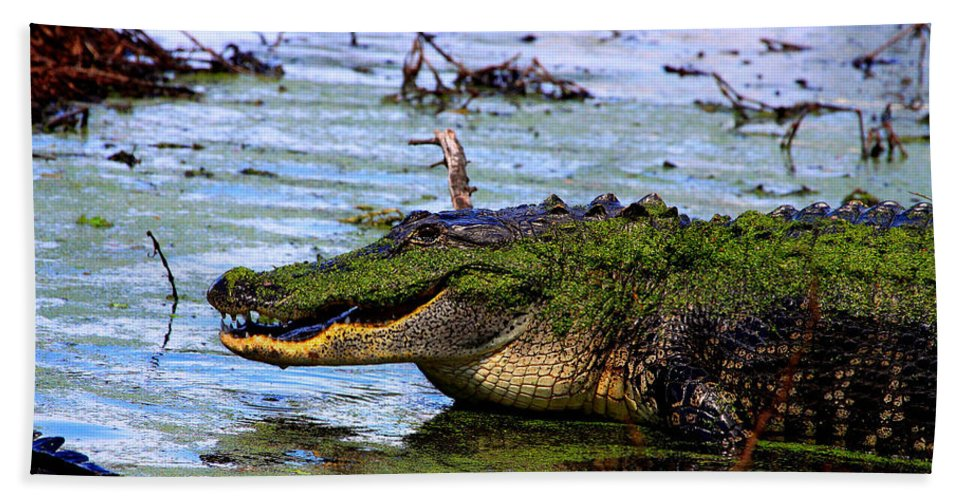 American Alligator Hand Towel featuring the photograph Gator Growl by Barbara Bowen