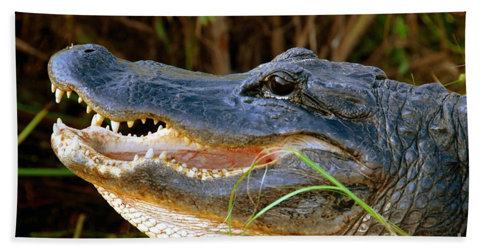 Alligator Hand Towel featuring the photograph Gator Head by David Lee Thompson