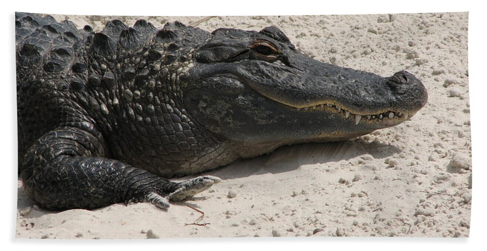Alligator Hand Towel featuring the photograph Gator II by Stacey May