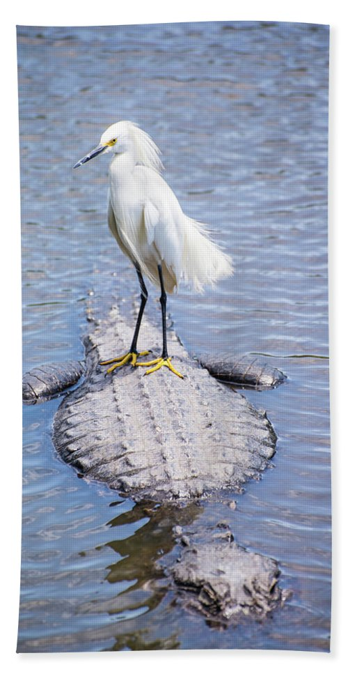 Egret Bath Sheet featuring the photograph Gator Taxi by Donna Ayers
