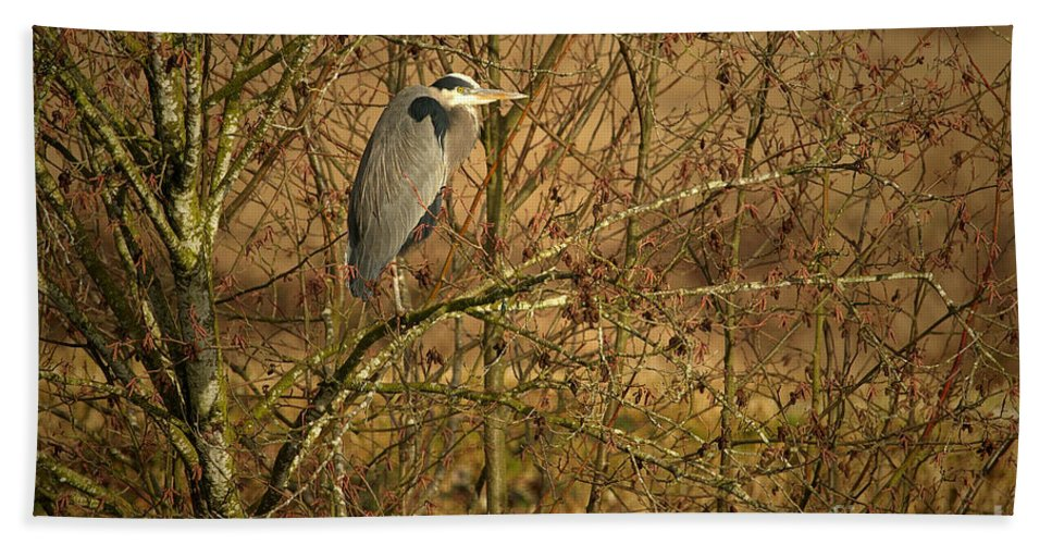 Great Blue Heron Hand Towel featuring the photograph Gbh In A Tree by Sharon Talson