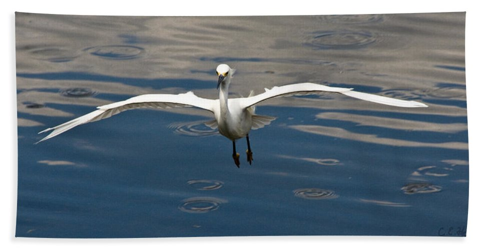 Snowy Egret Bath Sheet featuring the photograph Gear Down by Christopher Holmes