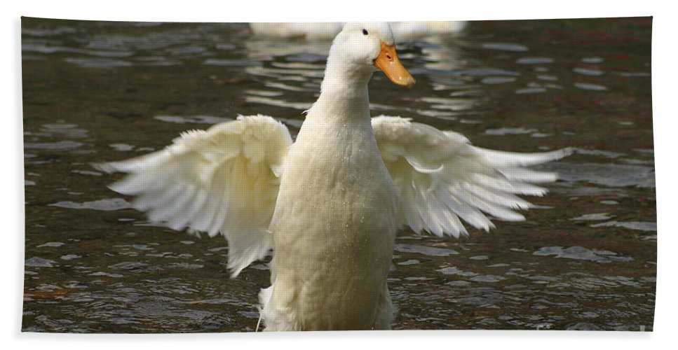 Ducks Hand Towel featuring the photograph Geese In The Water by Danny Yanai