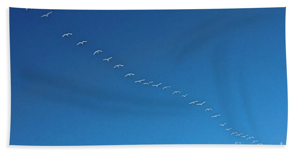 Geese Hand Towel featuring the photograph Geese On The Run by Casper Cammeraat