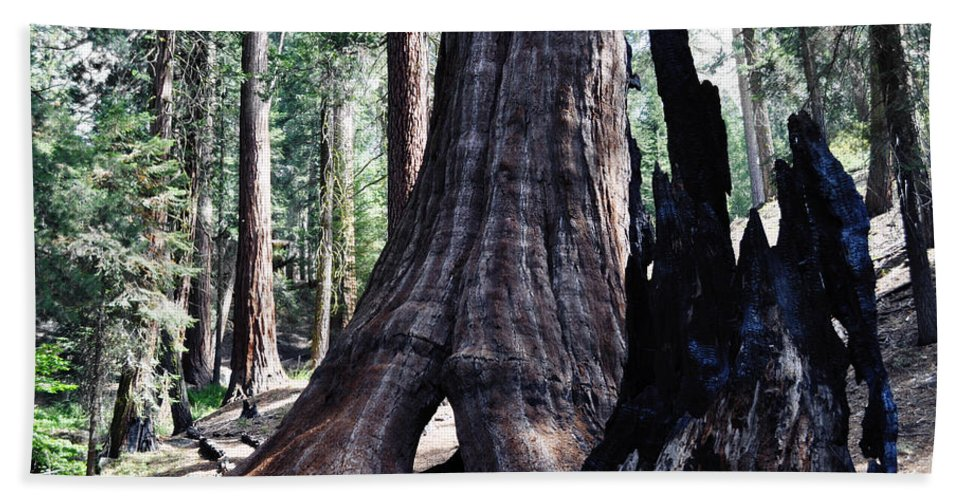 Sequoia National Park Hand Towel featuring the photograph General Grant Grove Sequoia Window by Kyle Hanson