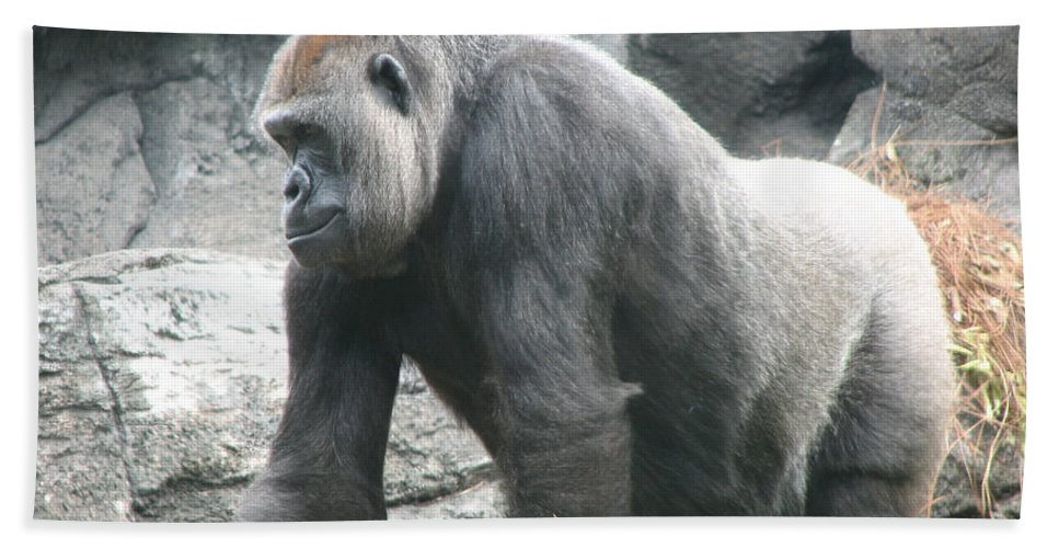 Gorilla Hand Towel featuring the photograph Gentle Giant by Stacey May