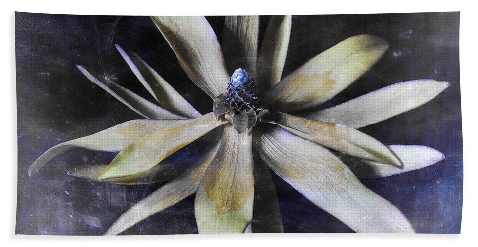 Flora Hand Towel featuring the photograph Genus Protea by Wayne Sherriff