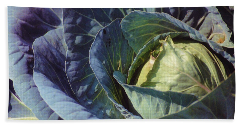 Still Life Bath Sheet featuring the photograph Georgia Cabbage by Jan Amiss Photography