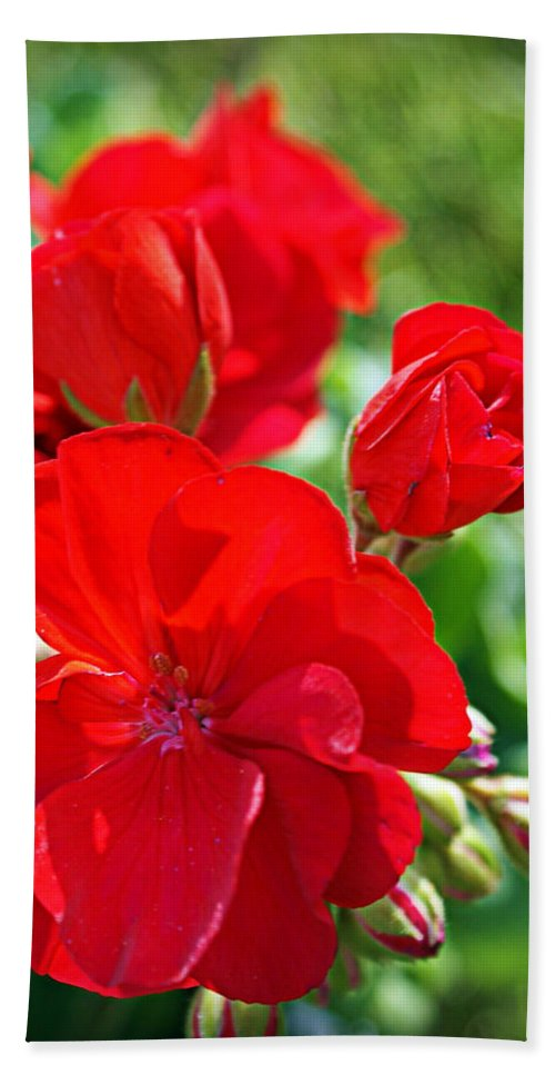 Red Bath Sheet featuring the photograph Geraniums by Cricket Hackmann