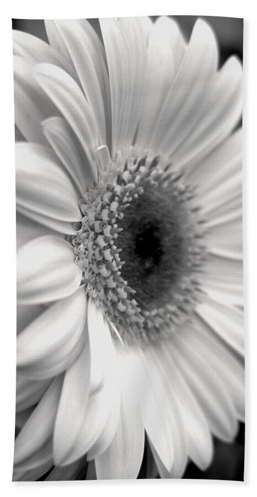 Flora Hand Towel featuring the photograph Gerbera Daisy by Natasha Sweetapple