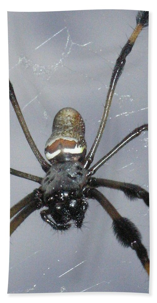 Nature Bath Sheet featuring the photograph Getting To Know A Golden Orb Weaver by Kimberly Mohlenhoff