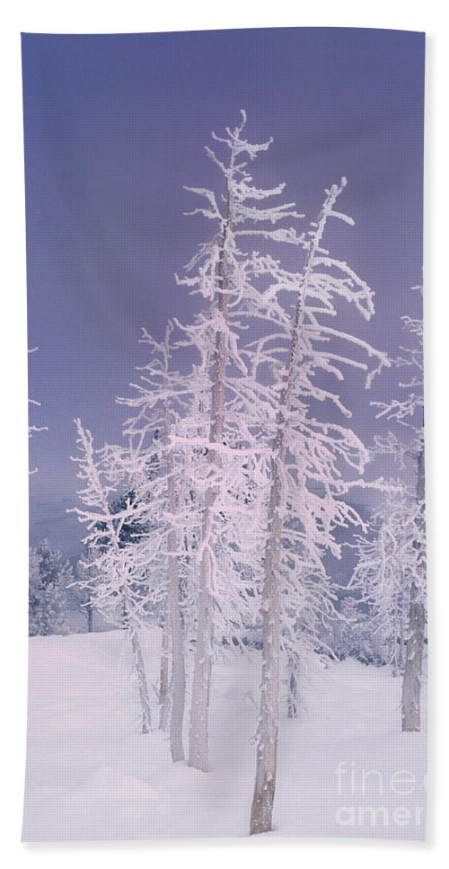 North America Hand Towel featuring the photograph Ghost Trees Yellowstone National Park by Dave Welling