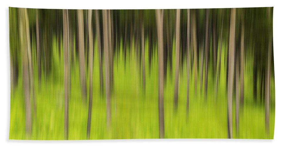 Coniferous Forest Bath Sheet featuring the photograph Ghostly Forest by John Vose