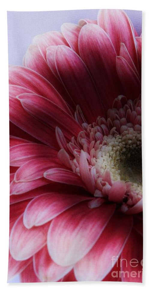 Gerbera Bath Sheet featuring the photograph Ghostly Gerbera by Clare Bevan