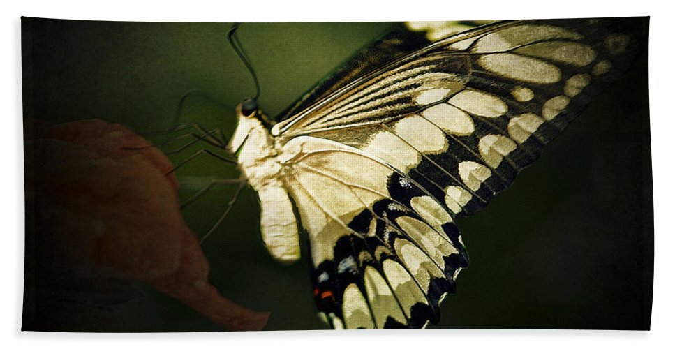 Butterflies Bath Sheet featuring the photograph Giant Swallowtail 2 by Ingrid Smith-Johnsen