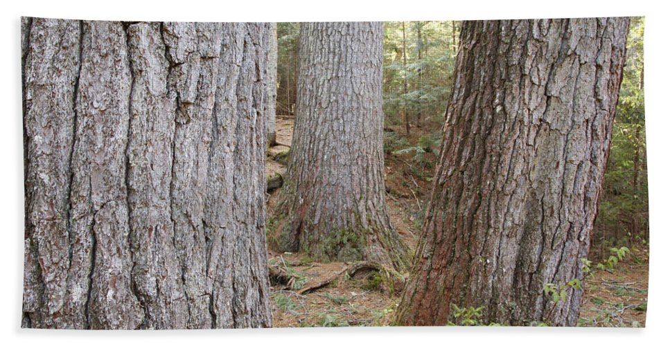 New England Bath Sheet featuring the photograph Giant White Pines - White Mountains New Hampshire by Erin Paul Donovan