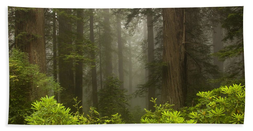 Redwood Bath Towel featuring the photograph Giants In The Mist by Mike Dawson