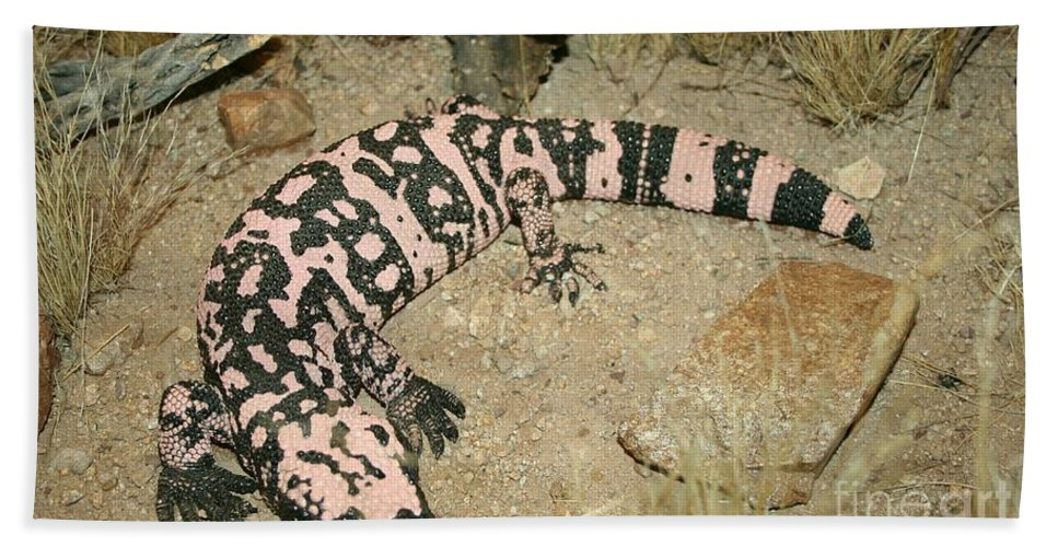 Gila Monster Hand Towel featuring the photograph Gila Monster by Christiane Schulze Art And Photography