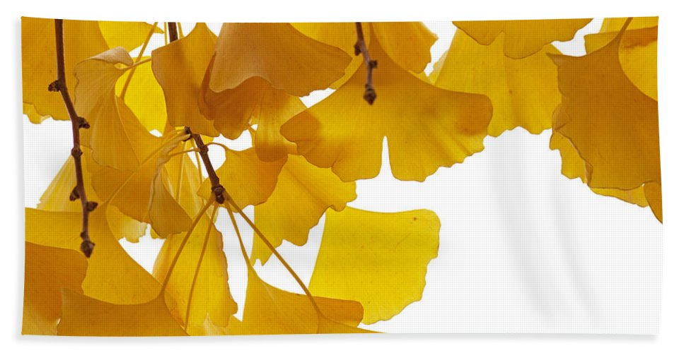 Fn Hand Towel featuring the photograph Ginkgo Ginkgo Biloba Leaves In Autumn by Aad Schenk