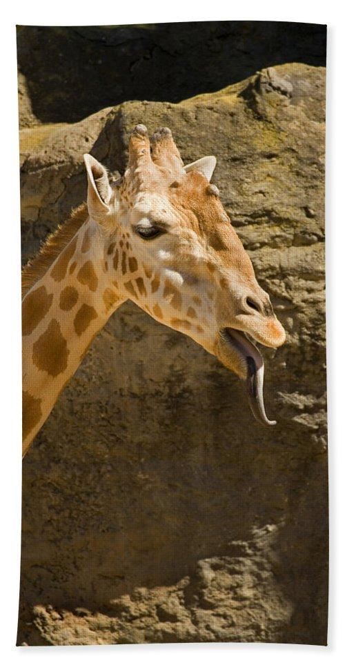 Giraffe Hand Towel featuring the photograph Giraffe Raspberry by Mike Dawson