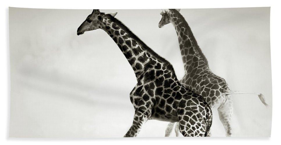 Giraffe Hand Towel featuring the photograph Giraffes Fleeing by Johan Swanepoel