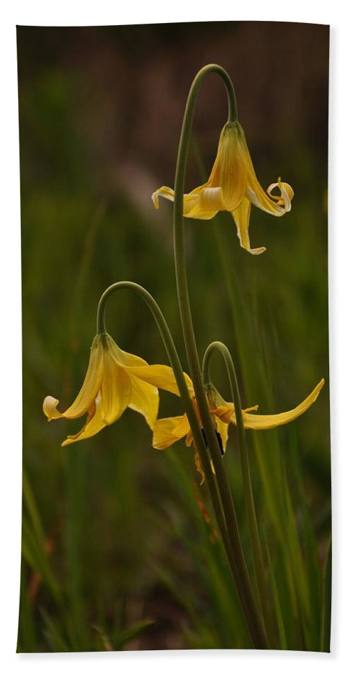 Yellowstone National Park Bath Towel featuring the photograph Glacier Lilly by Frank Madia