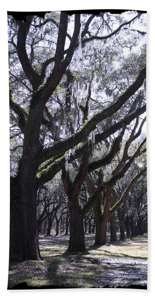 Souther Trees Bath Sheet featuring the photograph Glorious Live Oaks With Framing by Carol Groenen