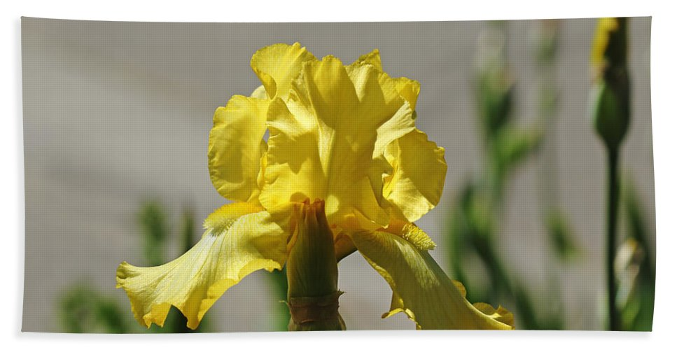 Iris Hand Towel featuring the photograph Glowing Yellow Iris by Debbie Oppermann