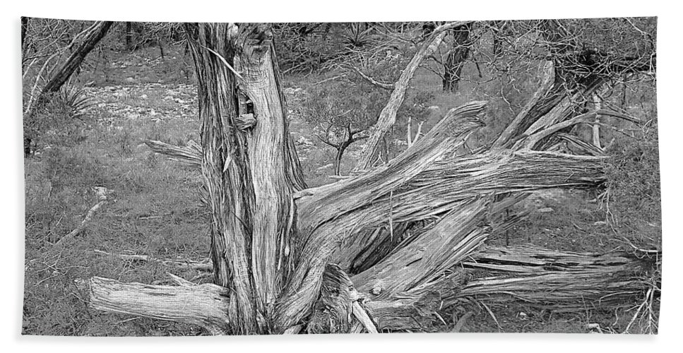 Trees Bath Sheet featuring the photograph Gnarled Cedar Stump by Jim Smith