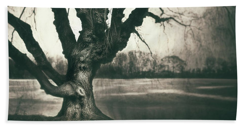 Gnarled Bath Towel featuring the photograph Gnarled Old Tree by Scott Norris
