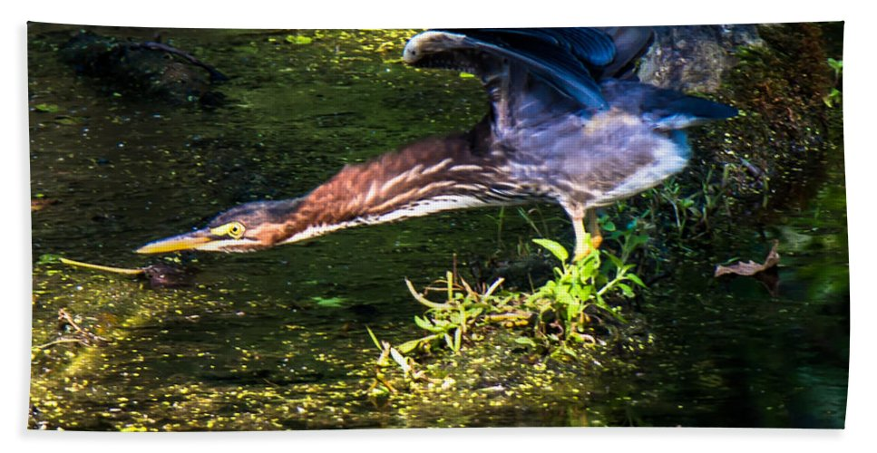 Green Heron Hand Towel featuring the photograph Go Forth by Kristin Hunt