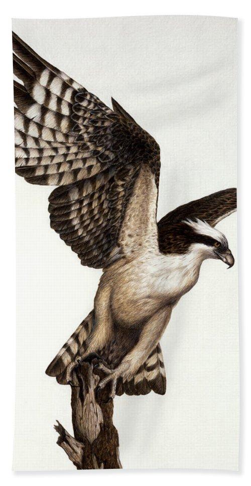 Bird Of Prey Bath Sheet featuring the painting Going Fishin' Osprey by Pat Erickson