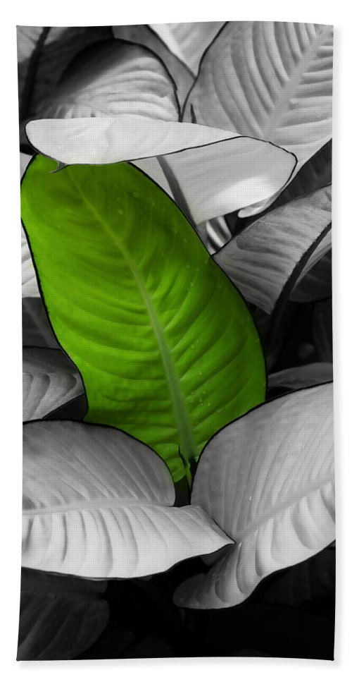 Leaf Bath Towel featuring the photograph Going Green - Dreamy by Marilyn Hunt